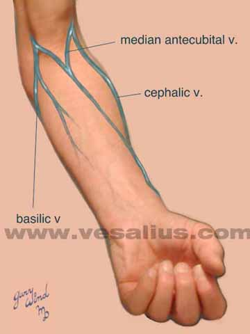 vesalius clinical folios: dialysis access, Cephalic Vein