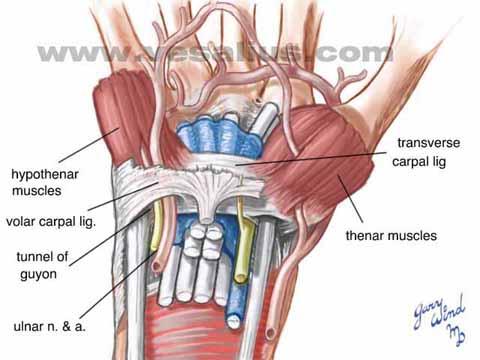 Vesalius Clinical Folios: Ulnar Nerve Transposition